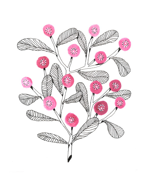 Illustration art artist flower ink girly floral artists on tumblr clovers pinks Vancouver artist goauche