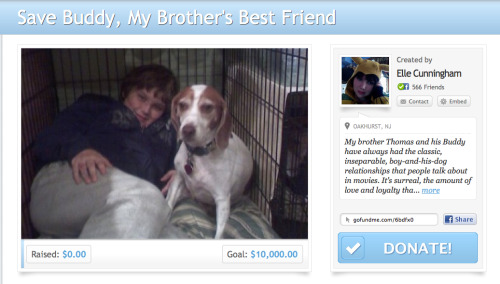 221cbakerstreet:  DONATE ON GOFUNDME  OR CLICK THE DONATE BUTTON ON MY PAGE TO SEND DIRECTLY TO PAYPAL Please Reblog! My brother Thomas and his Buddy have always had the classic, inseparable, boy-and-his-dog relationships that people talk about in movies. It's surreal, the amount of love and loyalty that these two souls have shared since Buddy was just a puppy. His eyes light up when Thomas walks into the room. When Thomas used to take the bus to and from school, Buddy would be there, waiting eagerly at the bus stop. The most exciting part of his day was seeing his best friend. Thomas doesn't take the bus anymore, he has his own car. And Buddy has grown up too- more round than tall, but grown he has. And their bond remains. It's like they communicate wordlessly, with smiles or looks or, in one's case, tail wags, imperceptible emotions that only each other can feel.Buddy is very sick. A few days ago, he began vomiting blood. We were terrified, and took him to the Red Bank Veterinary Hospital, where they've been taking excellent care of him. Thomas, in his own quiet, teenage boy way, is devastated. We all are. Even the other animals in the house sense that something is wrong, something is missing, some part in our well-oiled machine is now empty.Buddy has been diagnosed with Canine Immune Mediated Thrombocytopenia. In short, it's a clotting disorder. He's bleeding internally, and the clotting disorder is keeping that from stopping. You can read about here, in a more technical and explanatory manner than I can say: http://www.svsvet.com/resources/canine-immune-mediated-thrombocytopenia-itpDespite the grim outlook that we first held, this disorder actually has a pretty high survival rate of 90%. Our hearts have lightened somewhat at that number. We are nowhere near out of the woods, but there is hope, and hope is always worth clinging to.But it is also important to be realistic. My mother just sent me through college. She's sending my brother next year. As difficult as 