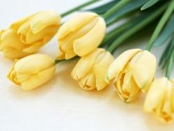 pretty flowers yellow tulips yellow tulips