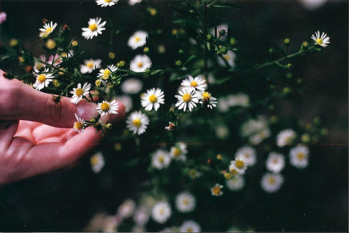 moanarch:  untitled by allisonsara on Flickr.