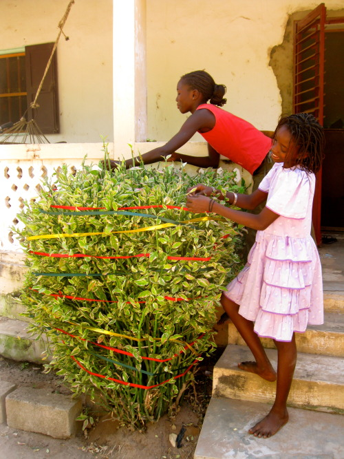 "csmcdermott:  Happy Friday! decorating the christmas bush outside with ribbon because everything else would get blown away or probably eaten. Also, this is my family's ""first tree"" (guess I wasn't feeling festive last year) shared homeland with the guys at the mairie 2nd goal is my favorite (bringing america to senegal)"