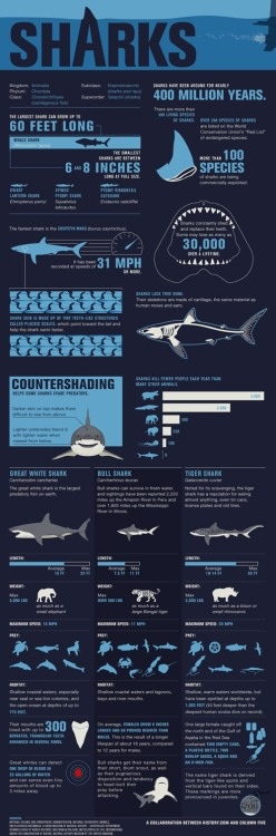 Shark fact-file Did you know that sharks have been around for nearly 400 million years? Or that an individual can lose as many as 30,000 teeth in a lifetime?
