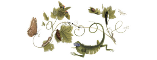 Google celebrates the 366th birthday of Maria Sibylla Merian, a naturalist and scientific illustrator who studied plants and insects and made detailed paintings about them. (via Google)