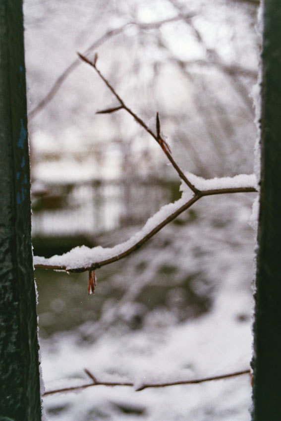 pa-ed:  snow branch