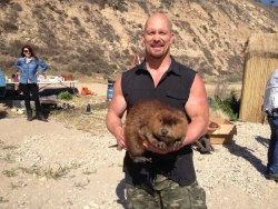 "modernmjolnirmonthly:  And now, ""Stone Cold"" Steve Austin with a beaver."