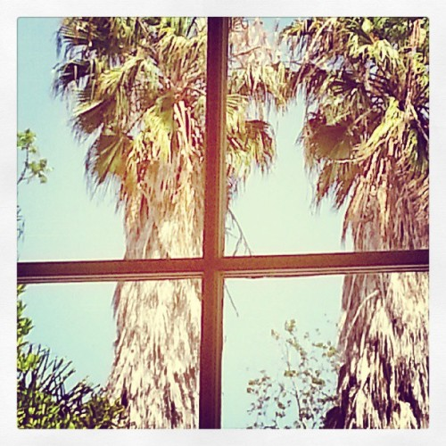 Room with a view. From the desk of frank & jan…. #LosAngeles #nature