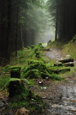 mystic-revelations:  Singletrack through Afan Forest By exedanni