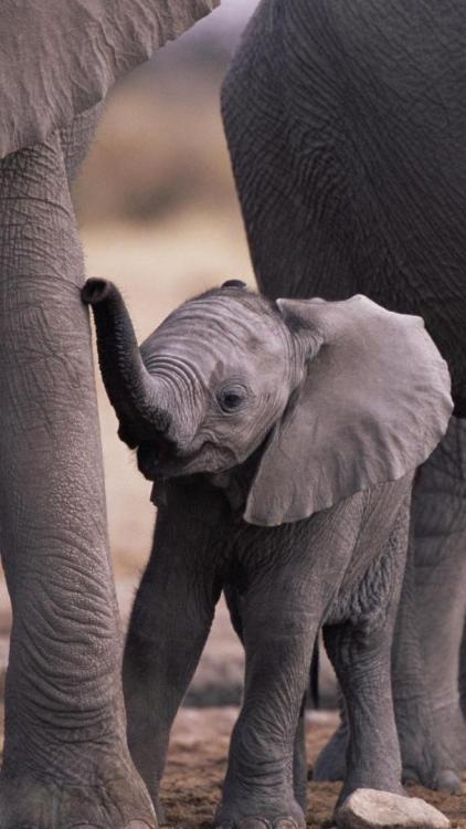 Cute Baby Elephant GalaxyS4 Wallpaper
