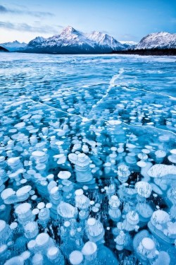 bisforpiano:  Frozen lake  bubbles. (via)