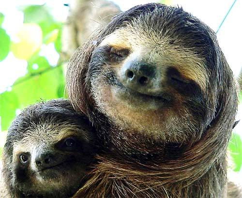 smilingsloths:  just smile, would you?