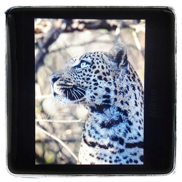 A great morning in Madikwe. #safari #travel #wildeyesa #wildlifephotos #photosafari