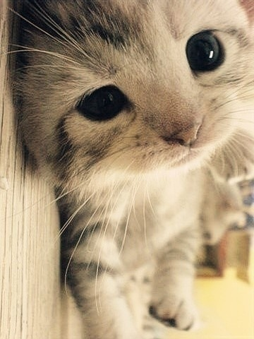 adorable | via Tumblr on We Heart It - http://weheartit.com/entry/57586453/via/ErinAbraham333