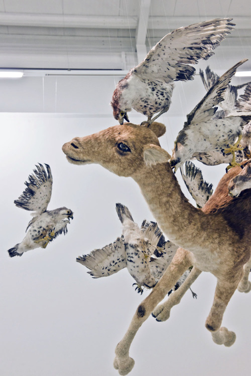 Cai Guo-Qiang - Flying Together (2011) dd