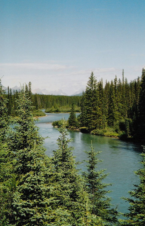 nnado:  British Columbia-Alberta border, near the Trans-Canada highway (by «»)