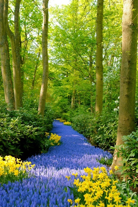 "ecogboutique:  Image source: BLUE PATH - KEUKENHOF GARDENS, NETHERLANDS ~ ""The earth has music for those who listen"""