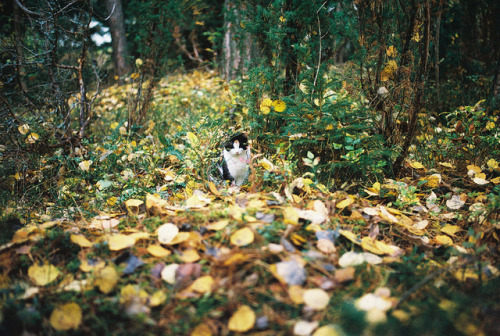 zigpitz:Cozy among the leaves by Picea abies on Flickr.