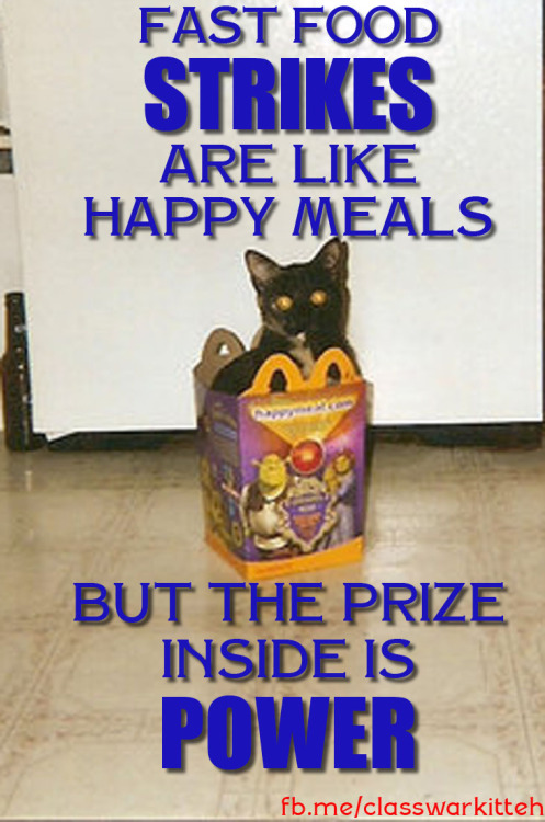 We haz eyez on the prize. Reblog this cat and LIKE the facebook pages for Fast Food Forward, Fight for 15 - Lucha por 15 WOCC, Raise Up MKE, Detroit 15 and St. Louis Can't Survive on $7.35
