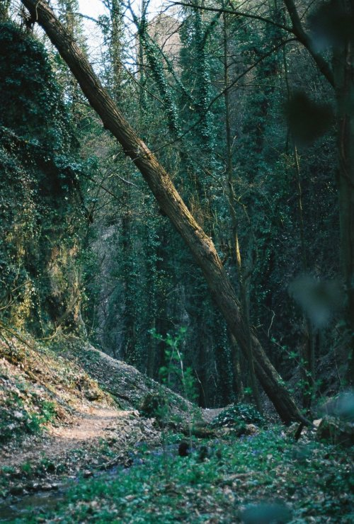 trippy-wiccan:  pine—forest:  synchronized-smoking:  . by ~SallllyK  ☮winter indie nature grunge vintage❅