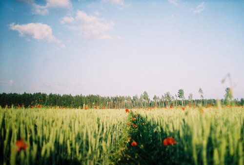 elatings:  field by Liis Klammer on Flickr.