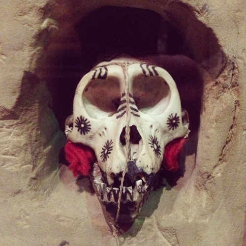 Holy Bones. Painted Baboon skull. Pitt Rivers Museum. Oxford. Thank you @poppyzella for showing me treasures and feeding my brain.