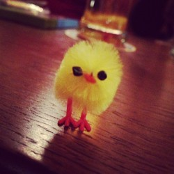Chicka-Khan now has a little pal thanks to Hannah! by andycoldicott http://bit.ly/104dt9u
