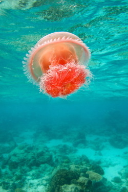 Jellyfish By James R.D. Scott