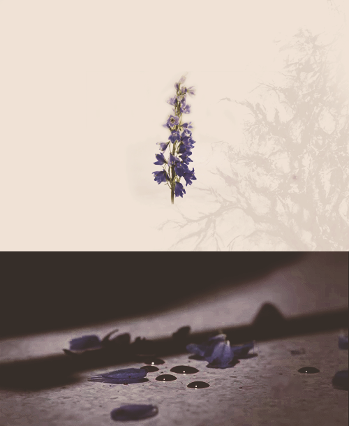 kingchesires:  teen wolf editing challenge: five objects → wolfsbane (1/5)  it can kill werewolves, cause them to change, or heal them if used correctly, in humans it can cause illness but doesn't appear to be deadly