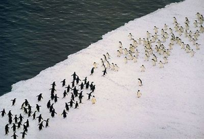 It's About To Get Real - The epic penguin wars have begun
