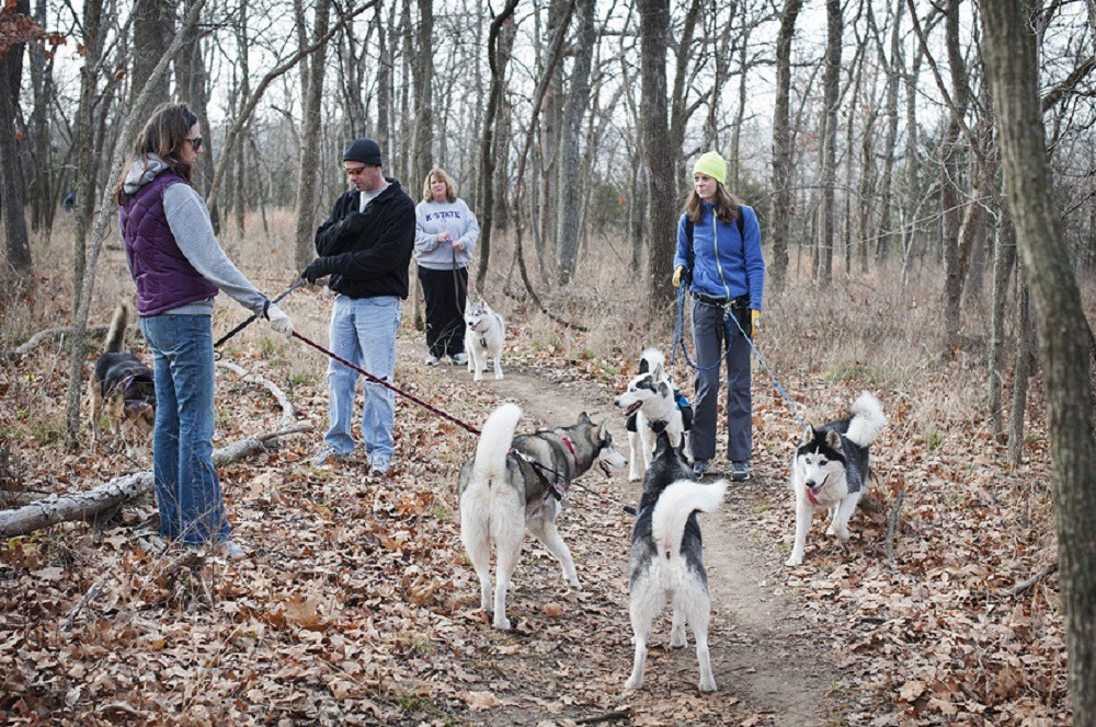 Husky Hike! - Let the Fur Fly - Kansas City Siberian Huskies! Meetup Group