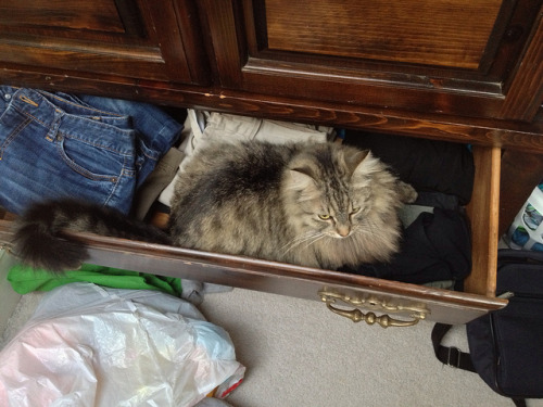 Cat in a drawer on Flickr.