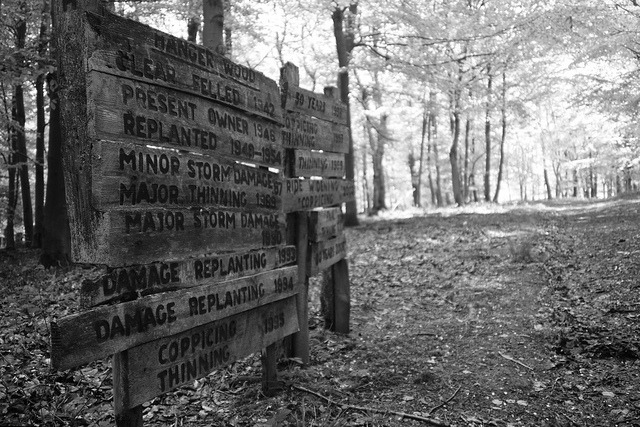 Hanger Wood History on Flickr. Took a photo yesterday.