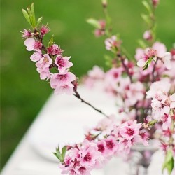 Under the cherry blossom tree #tabledecoration #wedding #inspiration #youandme #cherry #blossom #pink #grey #green #spring