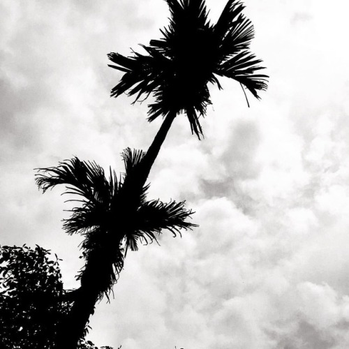 bnw_society bangladeshiphotographer nature_brilliance naturelovers bnw_captures bnw_rose bangladeshinpositivelight nature_lovers wanderlust mono nature tree palmtrees nature_perfection monochrome nature_shooters igersbnw bnw bnwsouls bnw_planet beautifulbangladesh silhouette bnwmood bangladesh trees dinajpur bw bnw_demand
