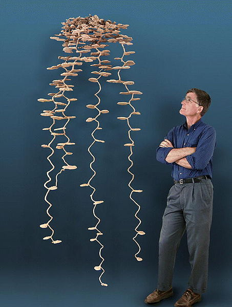 thedailywhat:  A New Perspective of the Day: This is What an Ant Colony Looks Like  Look at this aluminum cast of an underground ant colony created by American entomologist and retired biology professor Walter R. Tschinkel. Interestingly enough, for how complex this looks on the surface, the casting process is actually pretty straightforward (if not cruel); all you have to do is pour molten aluminum down into the hole and let time and nature work their magic.