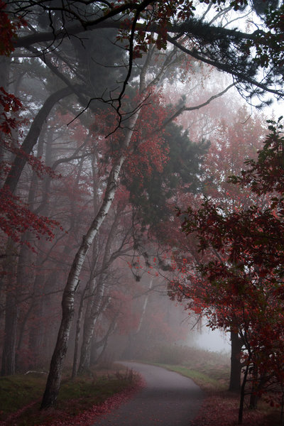 sundaug:  In the mist by *Angie-Pictures