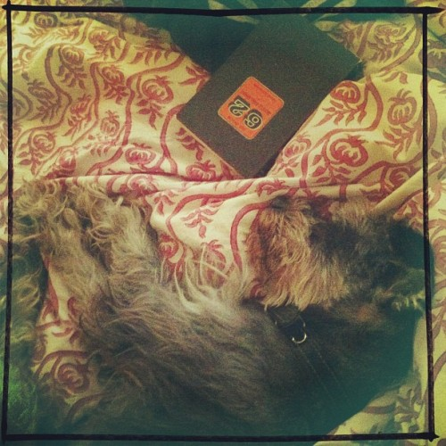 Clot y Cortázar en domingo. #clot #juliocortázar #book #dog #dogsofinstagram #schnauzer #animal #pet #nature #knowingtheworldthroughnature #bed #sunday #reading #orange #vintage  (at Gabs' Home Sweet Home)