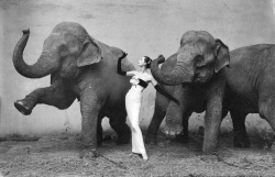 Dovima with elephants by Richard Avedon