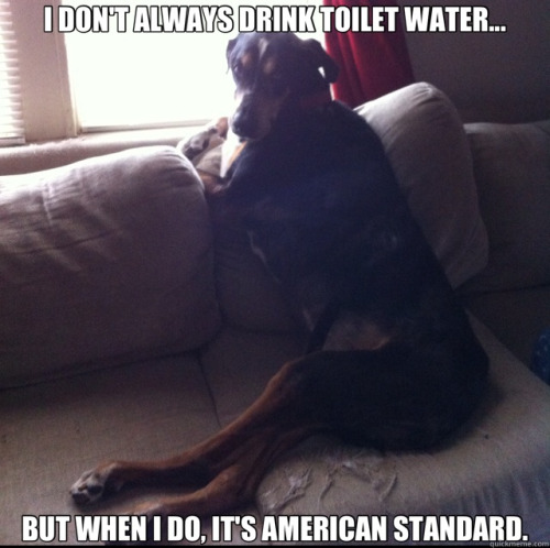 Another meme of my dog. He's such a good sport.
