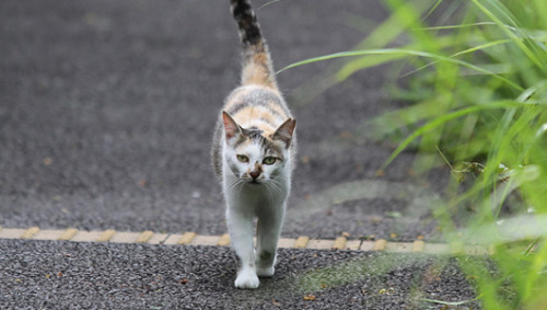 Cat makes harrowing 200-mile trek to find its way home     Scientists, baffled by the Florida cat's incredible navigational skills, search for answers.