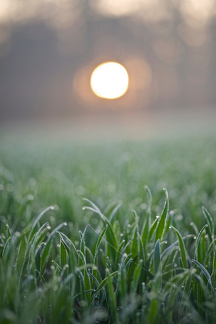 Morning sun by akarakoc on Flickr.