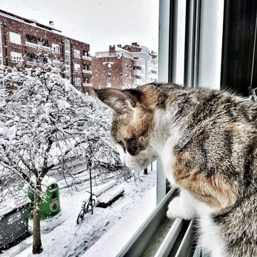 "Kitten Reminisces About Blizzard of 2013 Remember Nemo, the Blizzard of 2013? Well, of course you do, it was less than a week ago.  But a Brooklyn-based kitten named Irina has already begun reminiscing about the storm as if it happened in another era. ""She's been going around telling everyone who will listen about the 'great storm,' as if it was something from her childhood,"" said William Perkins, a source close to the situation. ""It wasn't even that bad here in the city. Just a few inches of snow."" Of course, when you only live 15 years, maybe last week really is the ""good ol' days."" Via izanzapatero."