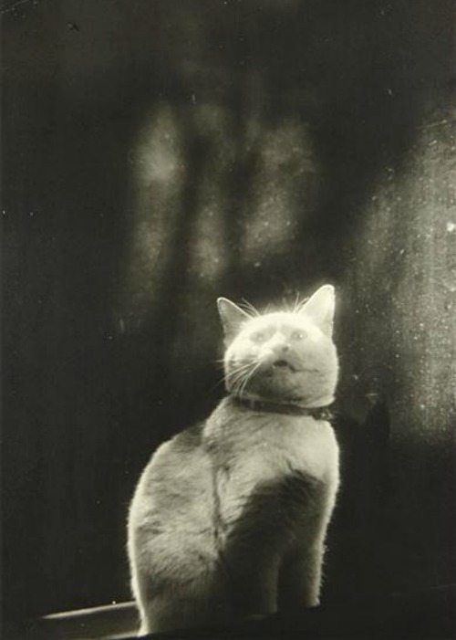 Please open the door (Cat in Window) by Shikanosuke Yagaki, c. 1930sAlso