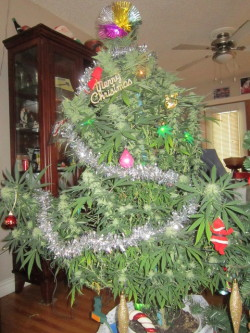 sdkjlmarley:  Merry christmas.  Ganja Tree !!