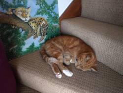 The art of sleeping #7 - There on the stair #woody