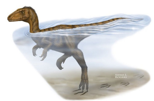 "Dinosaur Swam a Strong Doggy-Paddle  Claw marks on a 100-million-year-old riverbed in China reveal how some dinosaurs doggy-paddled over long distances, scientists say. ""What we have are scratches left by the tips of a two-legged dinosaur's feet,"" study researcher Scott Persons, of the University of Alberta, said in a statement. ""The dinosaur's claw marks show it was swimming along in this river and just its tippy toes were touching bottom."""
