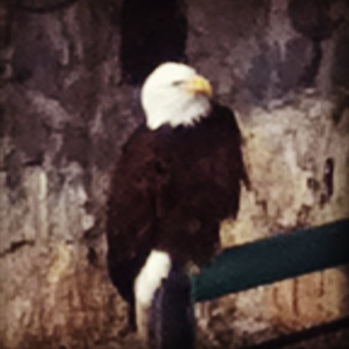 Amazing birds. (at Parque Del Cóndor)