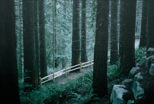 fiskarna:  of cedars and picket fences by Intrepidation on Flickr.