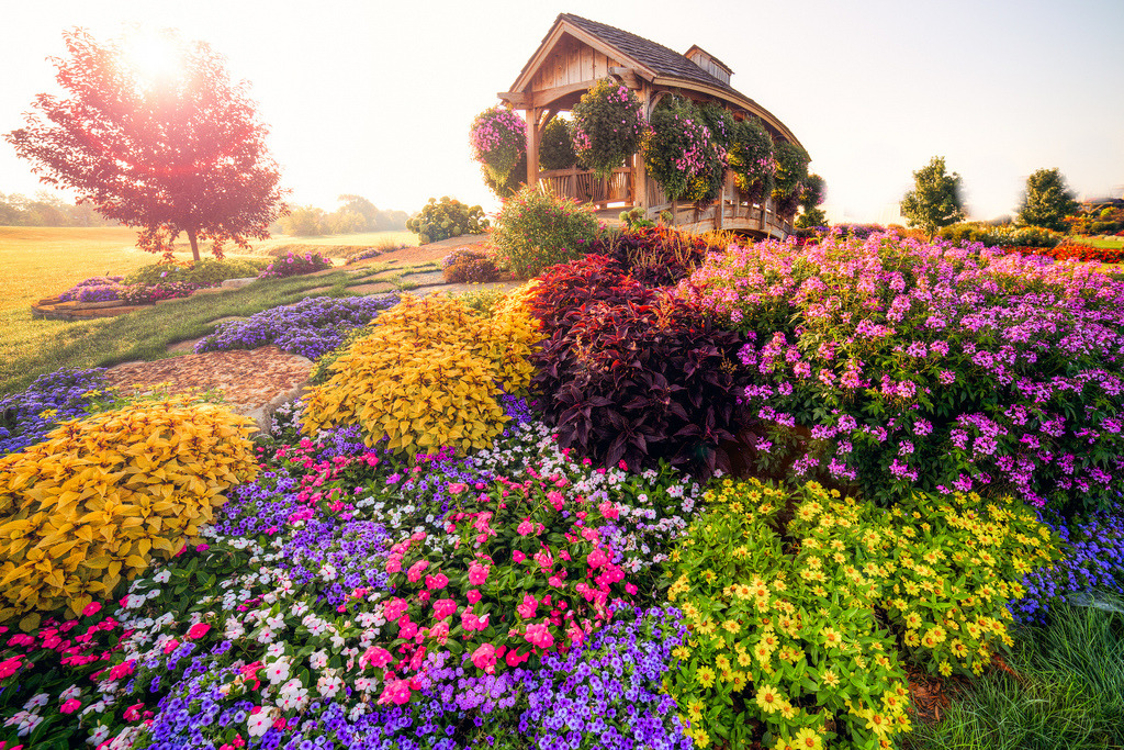 Flowers in Cartoon Land (by Moobyluvsme)