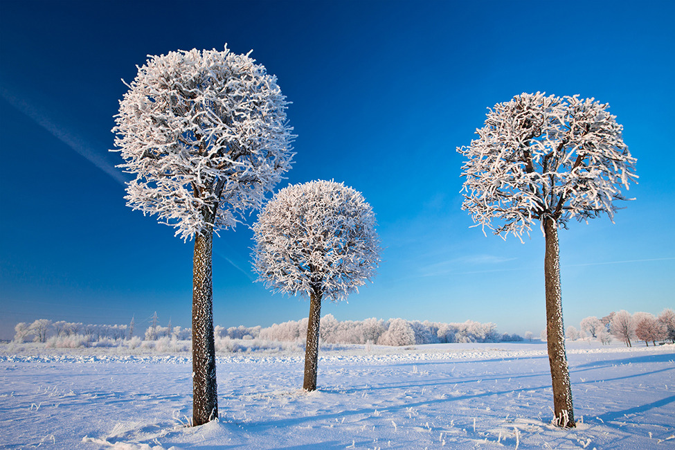 Photo of the Day: Surreal Winter Lollipops Photo by: Matas Jūras (Vilnius, Lithuania); Kaunas, Lithuania