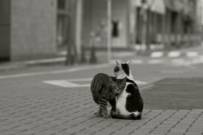 heartisbreaking:  I love you by H2@Japan on Flickr.
